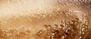 Фото Солдаты Rome: Total War Шлем 2 Emperor Edition