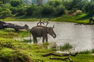 Фото Шри-Ланка Слоны Реки Yala National Park