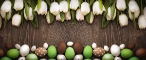 Картинка Тюльпаны Пасха Яйца Белый Цветы