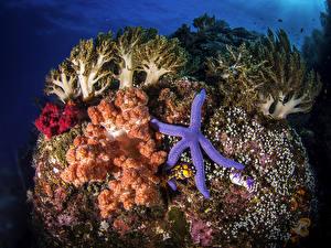 Фотография Подводный мир Кораллы Морские звезды
