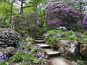 Фотографии Великобритания Парки Цветущие деревья Лестница Кусты Garden Harlow Carr Природа