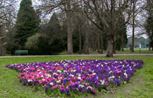 Обои Великобритания Парки Гиацинты Деревья Bute Park Cardiff Природа