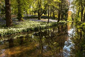 Обои Великобритания Весенние Леса Пруд Галантус Деревья Отражение Whitmore