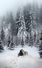 Фото Зимние Волки Снег Ель Фантастика