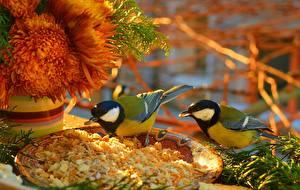 Картинки Птицы 2 Parus Животные