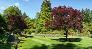 Фотографии Канада Сады Деревья Газон Кусты Butchart Gardens