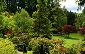 Обои Канада Сады Деревья Кусты Ель Butchart Gardens Природа