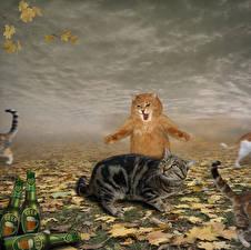 Фото Коты Испуг Крик Забавные Животные