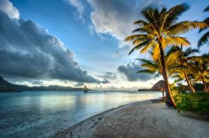 Фотография Побережье Французская Полинезия Бора-Бора Небо Пейзаж Океан Тропики Вечер Пальмы Облака Природа
