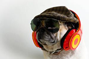 Картинка Собаки Серый фон Бульдог Кепка Очки Наушники Морда Смешные Животные