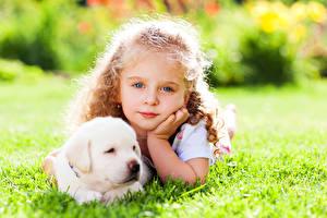 Картинка Собаки Девочка Взгляд Лица Ретривер Щенки Красивые ребёнок