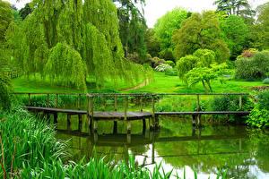 Картинка Англия Парки Пруд Мосты Деревья Газон Sezincote Park
