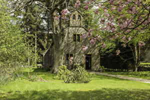 Картинка Англия Храмы Церковь Цветущие деревья Ствол дерева Трава Города