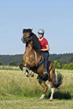 Фото Конный спорт Лошадь спортивный Девушки