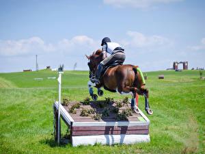 Картинки Конный спорт Лошадь Прыгает Вид сзади
