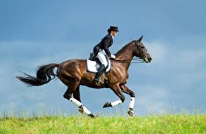 Картинка Конный спорт Лошади Бегущая Униформа спортивные Девушки
