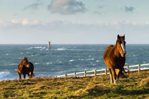 Картинки Лошади Море Побережье Луга Трава Животные Природа