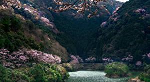Фотография Япония Озеро Леса Цветущие деревья Гора Природа