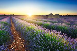 Обои Лаванда Поля Рассветы и закаты Франция Солнце Лучи света Природа