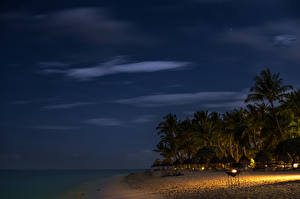 Фотография Маврикий Побережье Тропики Вечер Небо Пальмы