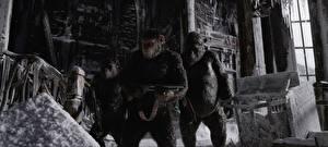 Фотографии Обезьяны Винтовки Планета обезьян: Война Трое 3 Кино