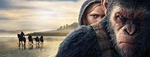 Картинка Обезьяны Планета обезьян: Война Смотрят Лица Хмурость кино