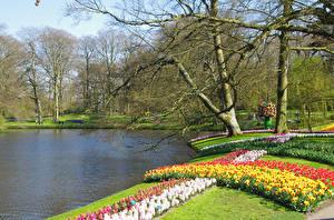 Картинка Нидерланды Парки Пруд Деревья Keukenhof