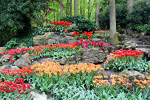 Картинка Нидерланды Парки Весенние Тюльпаны Камень Keukenhof