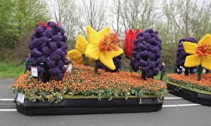 Картинка Нидерланды Парки Тюльпаны Дизайн Keukenhof Природа