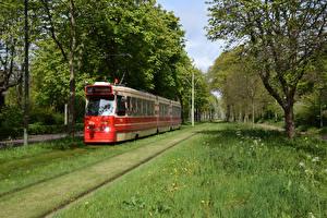 Картинка Голландия Железные дороги Дерева Трава Трамвай Trams in The Hague Природа