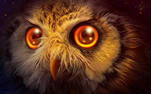 Обои Совы Глаза Рисованные Вблизи Клюв Смотрит Животные