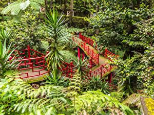 Фото Португалия Сады Мосты Деревья Ограда Кусты Monte Palace Tropical Garden Funchal Madeira Природа