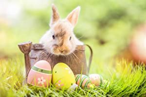 Картинка Кролики Пасха Яйца Трава