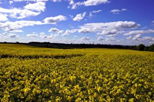 Фотография Пейзаж Поля Рапс Небо Облака