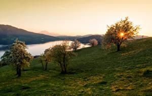 Картинка Швейцария Рассветы и закаты Реки Луга Цветущие деревья Walchwil Природа