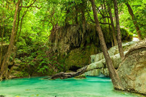 Обои Тропики Леса Ствол дерева Jungle
