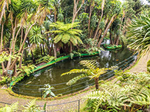 Картинка Тропики Сады Пруд Пальмы Monte Palace Tropical Garden Funchal Madeira