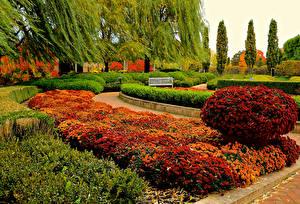 Картинки США Сады Хризантемы Чикаго город Дизайн Кусты Botanic Garden Природа