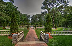 Фото США Парк Газоне Дерева Ели Norfolk Botanical Garden Virginia Природа