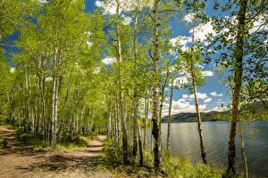 Обои Штаты Весенние Речка Березы Тропинка Utah