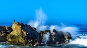 Картинки Америка Волны Чайки Море Калифорнии Скала Брызги Laguna Beach Природа