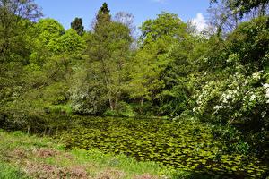 Картинка Великобритания Леса Весна Пруд Деревья Calke Abbey Derbyshire