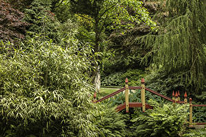 Обои Великобритания Сады Мосты Деревья Biddulph Grange Japanese Garden Природа