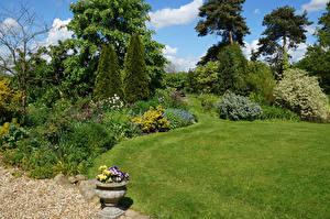 Обои Великобритания Парки Газон Кусты Дерево Goltho Gardens Lincolnshire Природа