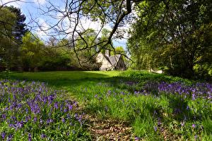 Фотография Великобритания Парки Весна Колокольчики Кусты Трава Shipley Country Park Heanor
