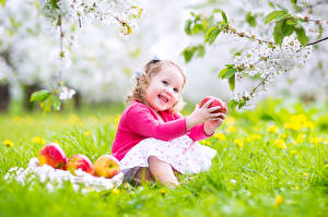 Фотографии Яблоки Цветущие деревья Девочки Улыбка Ветки Сидит