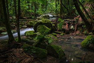 Фотографии Австралия Леса Камни Ручей Мох Nightcap National Park
