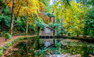 Картинка Австралия Сады Пруд Осень Деревья Пальмы Alfred Nicholas Memorial Gardens Природа
