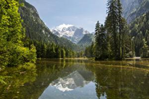 Картинки Австрия Горы Леса Озеро Пейзаж Ель Gosau