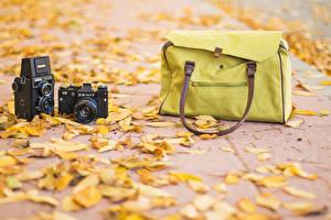 Картинка Осенние Сумка Фотокамера Листья Zenit